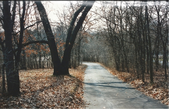 Allen Drive - Before it was developed into Allen Court